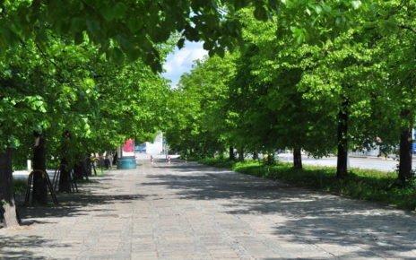 Drzewa w Warszawie