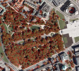 Warszawska Mapa Koron Drzew